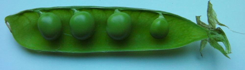 『豆紋2』ヘッダーイメージ