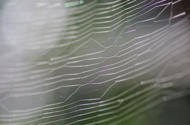 美しく透明な模様 蜘蛛の巣についた露01