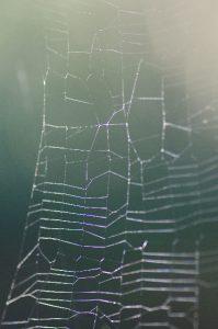 美しく透明な模様 蜘蛛の巣についた露02