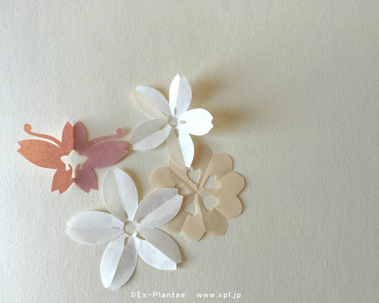 もんきりで春を呼ぶ 季節をたのしむもんきり壁紙 花を待つ