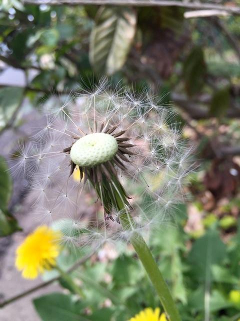 キキミミ情報「4/30くさっぱら公園 春の種まき」