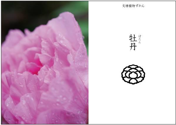 【文様植物ずかん】 牡丹