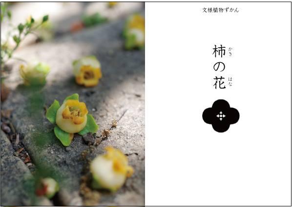 【文様植物ずかん】 柿の花