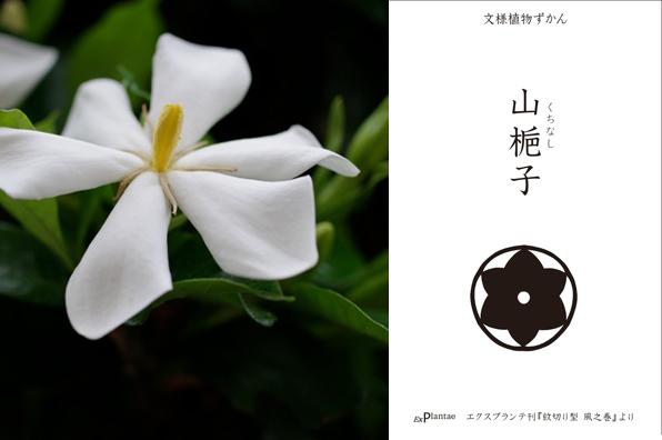 文様植物ずかん山梔子