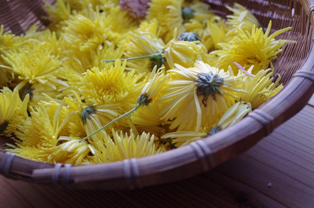 ザルの中の菊の花