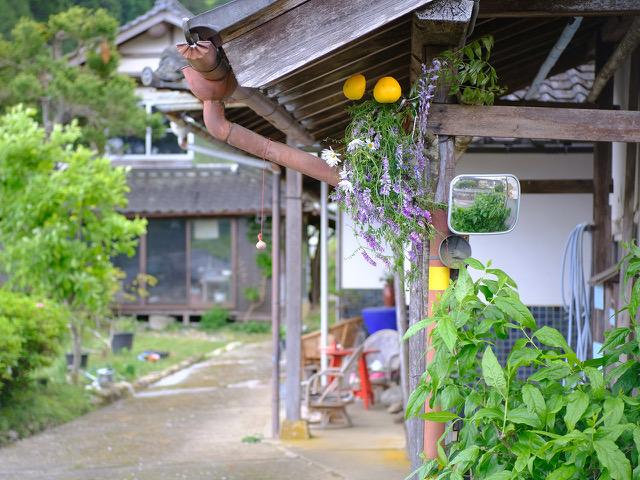 兵庫県のNさまより送っていただいた画像です